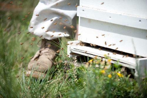 1-bees-nectar-pollen