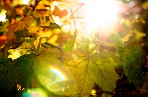 leaves sun autumn fall tree