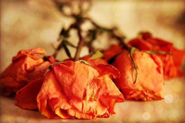 https://www.flickr.com/photos/kathycsus/4060793077