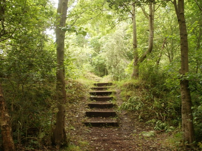 800px-Steps_in_Windy_Nook_Nature_Reserve
