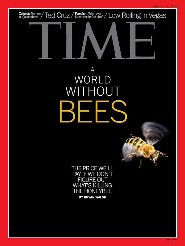 bees time cover