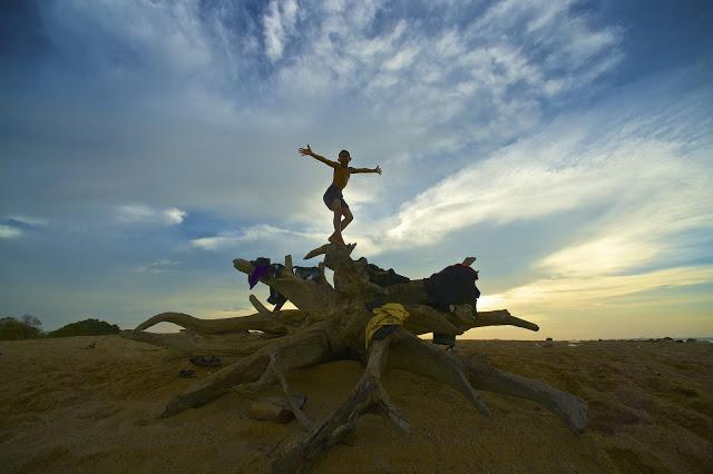 hero sunset tree trunk