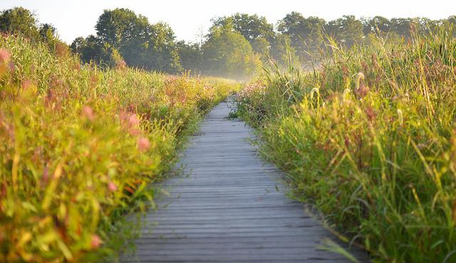 path marsh nature