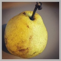 pear author's pic