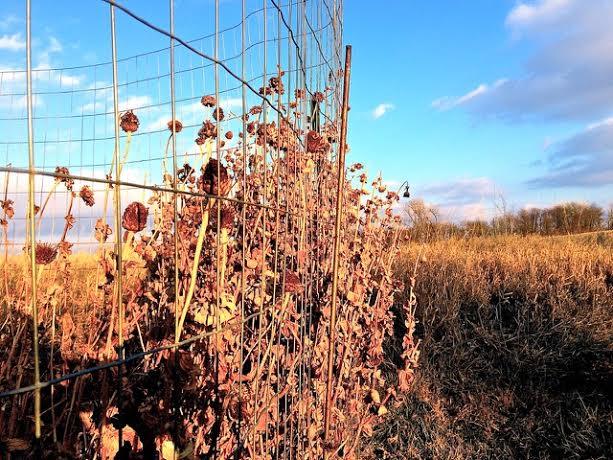 Lisa Murphy garden