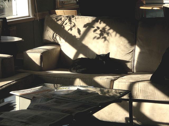 cat house lazy