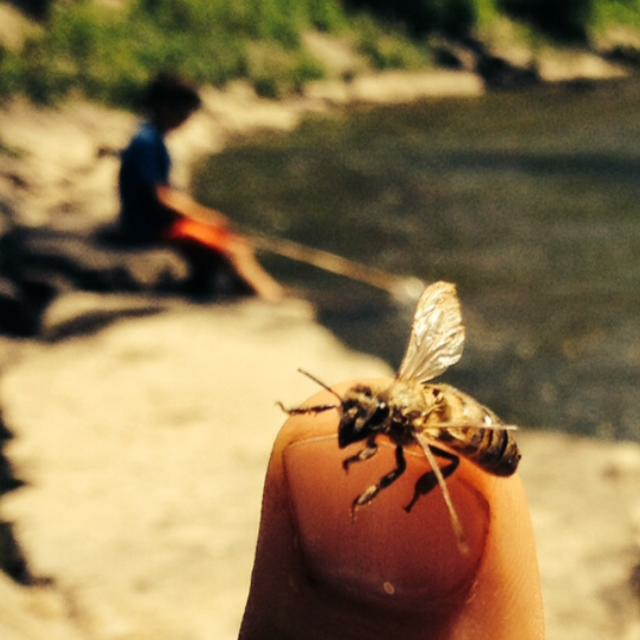 bees, life