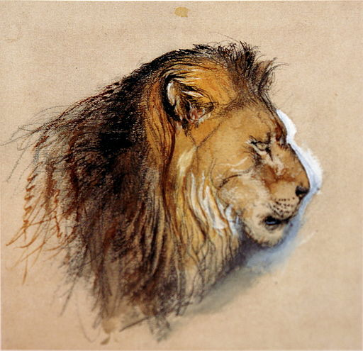 Lion's_profile_from_life_Ruskin