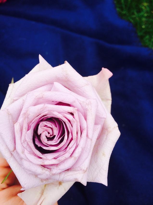 Self-Love Rose