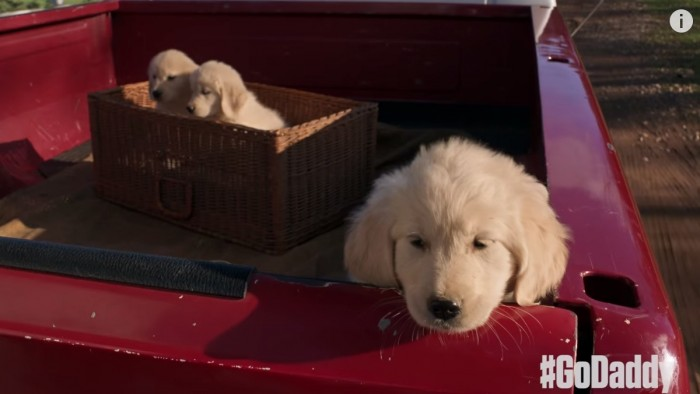 puppy, godaddy