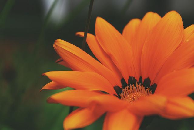 martinak15/flickr