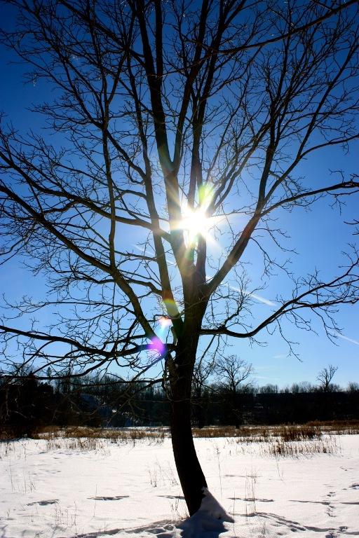sun spring tree