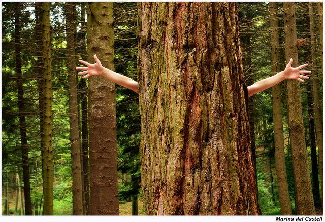 tree hugger eco forest love