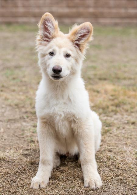Dog, hugging with eyes