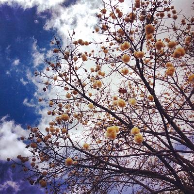author's photo: yoli ramazzina