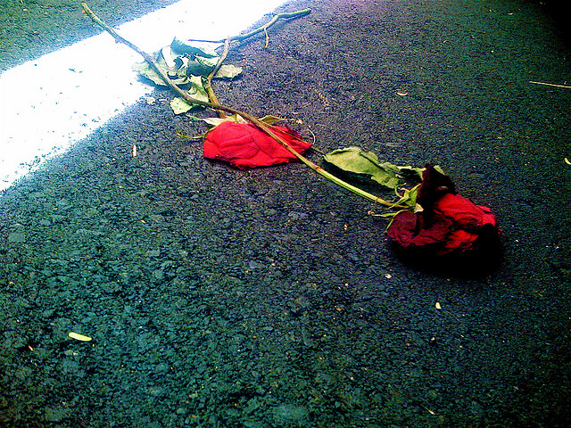 roses crushed