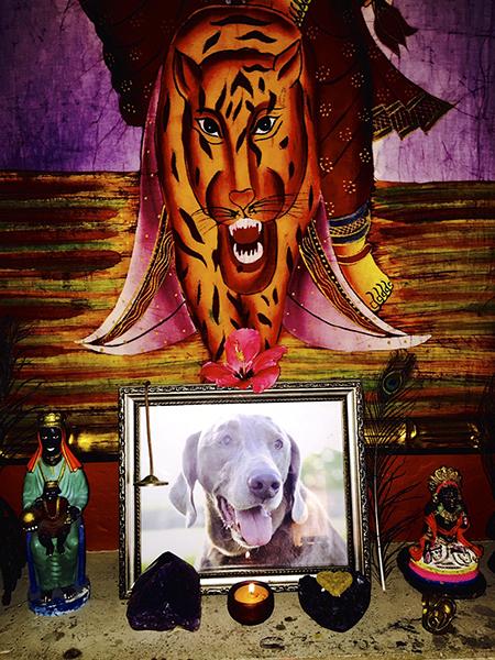 Dog, altar, grief