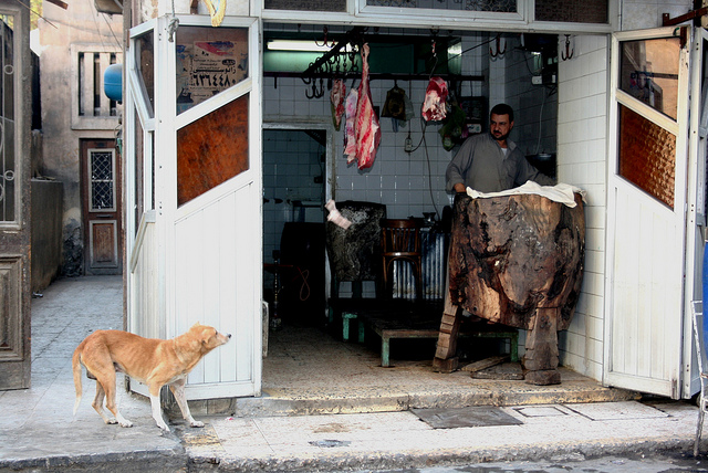 A Festival to Slaughter and Eat Cats & Dogs on June 22nd ... - photo#10