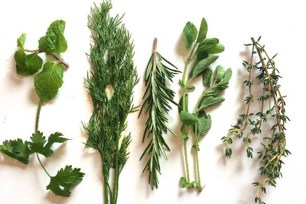 Carminative Herbs_ChitChaatChai_Rumin