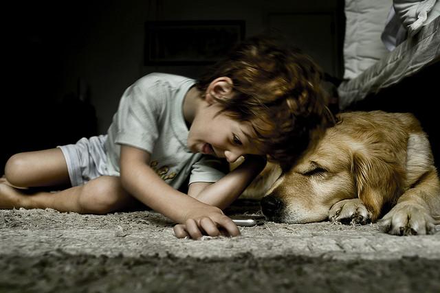 cute kid happy boy dog