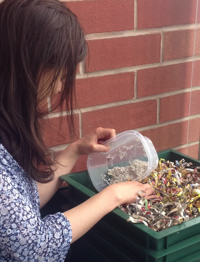 composting, okay to use with credit.  Alyssa Barrette
