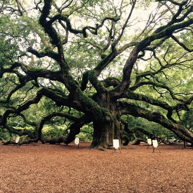 tree Alandria Mustafa