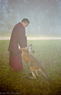 (10198_ng.JPG) Lama Zopa Rinpoche with kangaroo in Adelaide, Australia, 1983. Photos taken or donated by Wendy Finster.