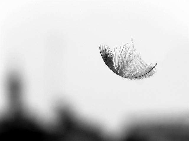 a feather Partha S. Sahana