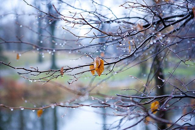 Flickr/Bùi Linh Ngân