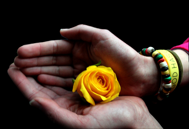 flowers, hands, forgiveness, yellow flower