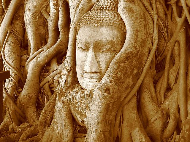 buddha tree roots Thailand
