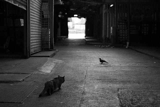 Kevin Law/Flickr