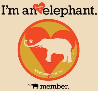 elephant investor