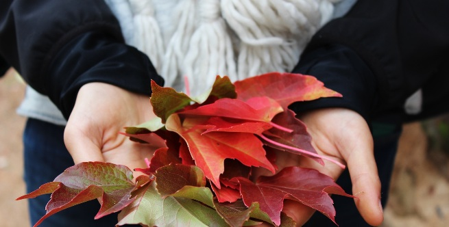 leaves fall differences people