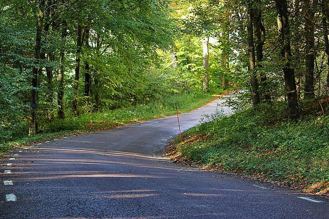 road trees
