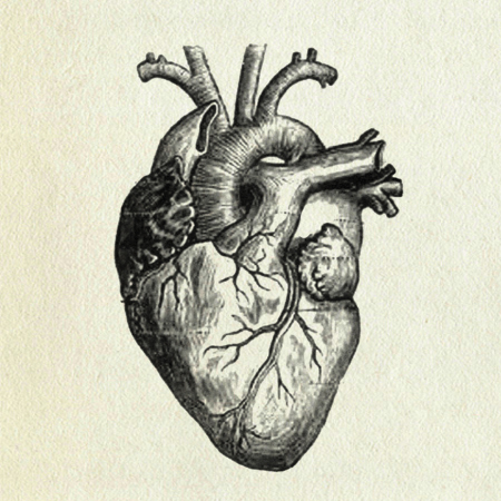heart, human heart,