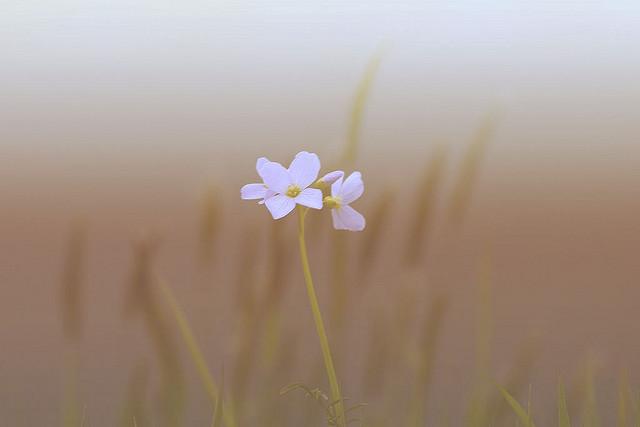 flower nature simple mindful focus