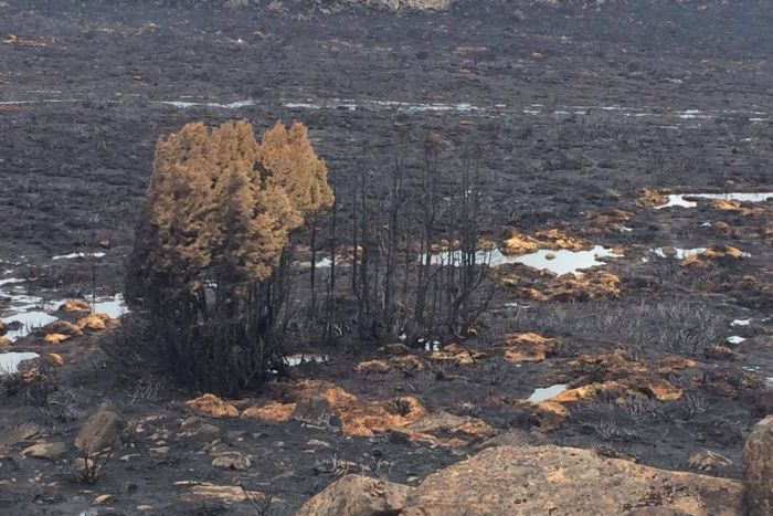 http://www.abc.net.au/news/2016-01-30/area-blackened-in-northern-tasmania-after-bushfire/7127322