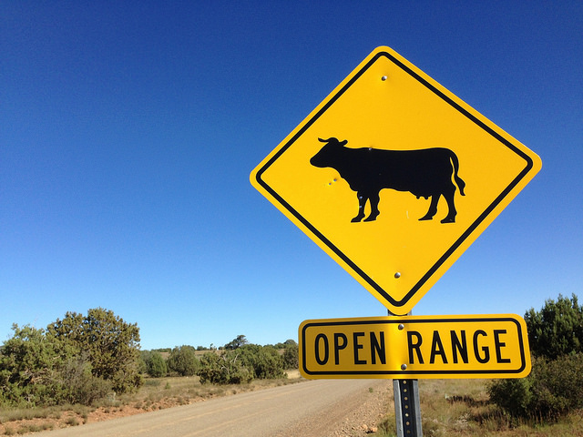 cow sign open range