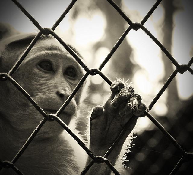 tiger cage zoo