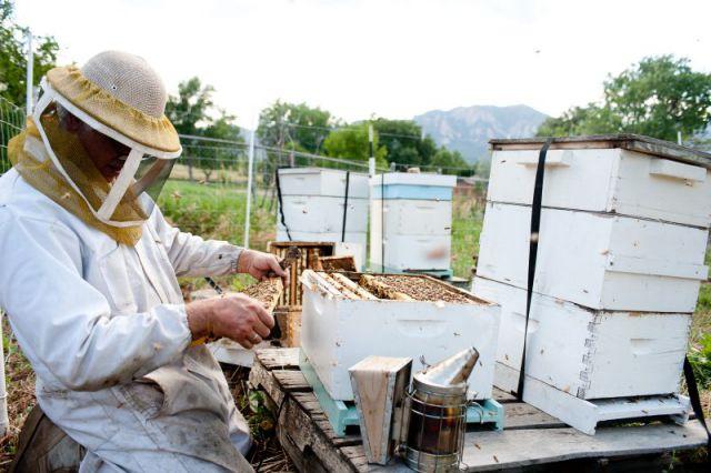 beekeeping640