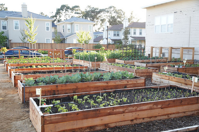 raised garden beds growing crops food