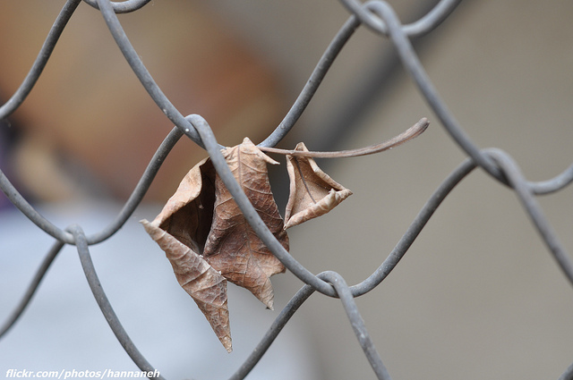 Leaf in fence, loss