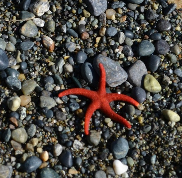 Starfish article featured pic v2