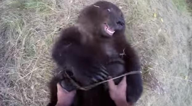 BearStill