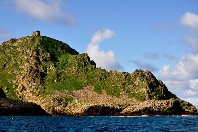 san francisco farallon islands whales eco green