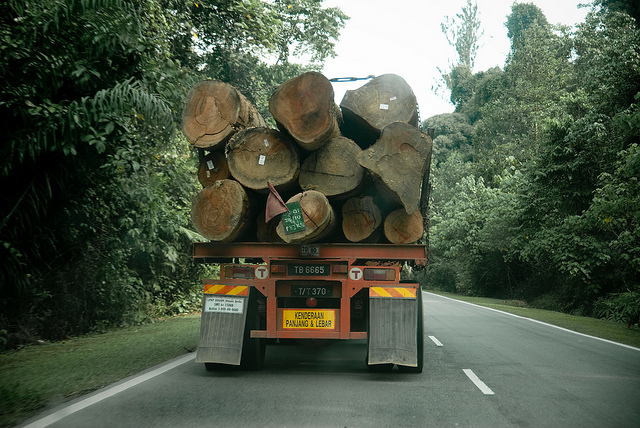 trees eco environment truck logging deforestation