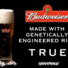 Budweiser is made with GMO rice? True, true.