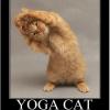 Tips for beginner Yogis. ~ Sharon Marrama