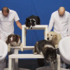 """Latest greatest """"Ok Go"""" music video supports animal rescue."""